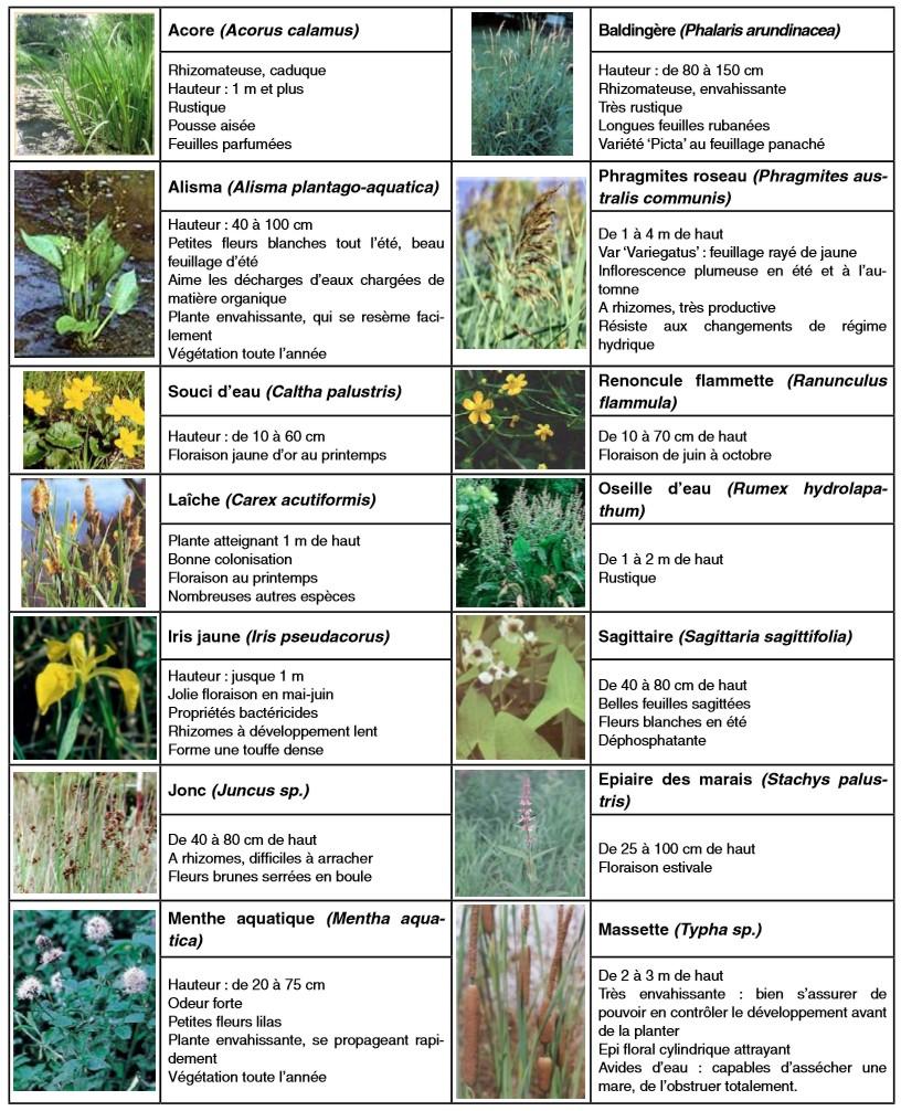filtres plantés phytoépuration